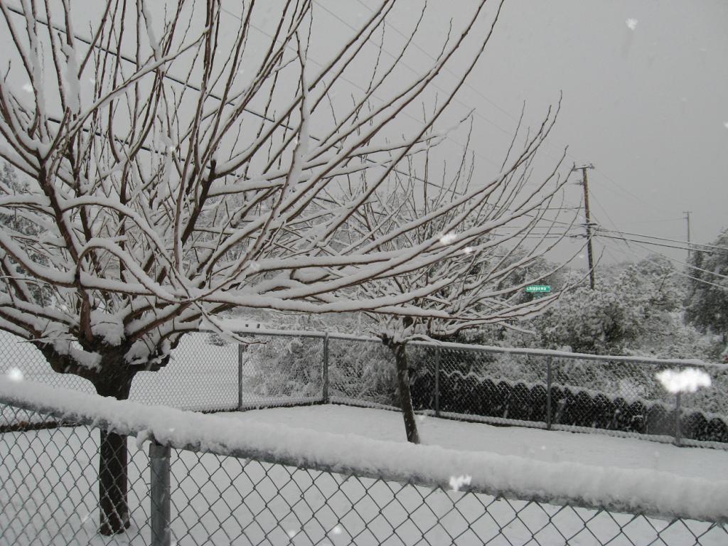More snow.-02-17-11-005.jpg